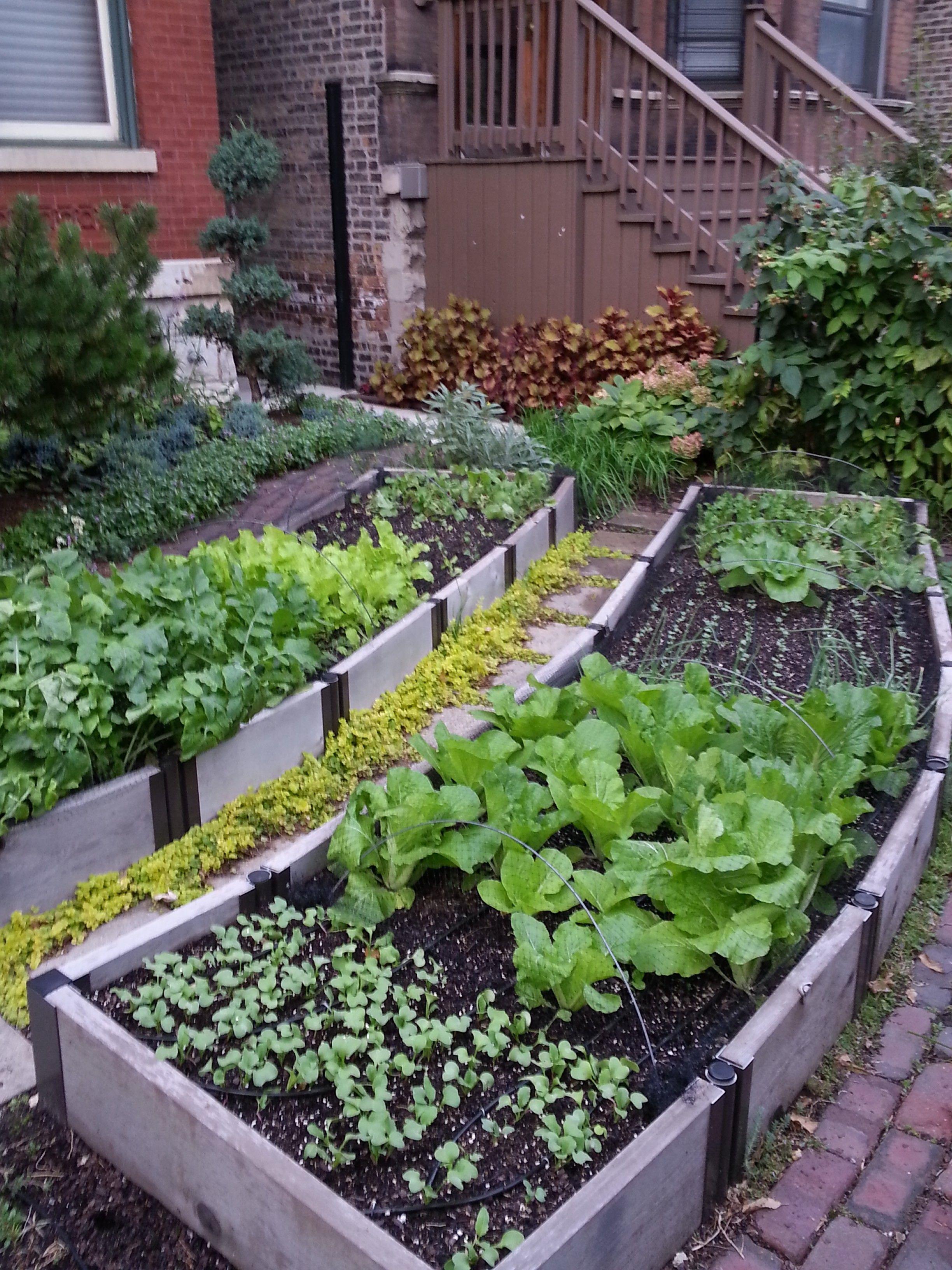 Maximize Your Garden Through These Excellent Organic Gardening Tips