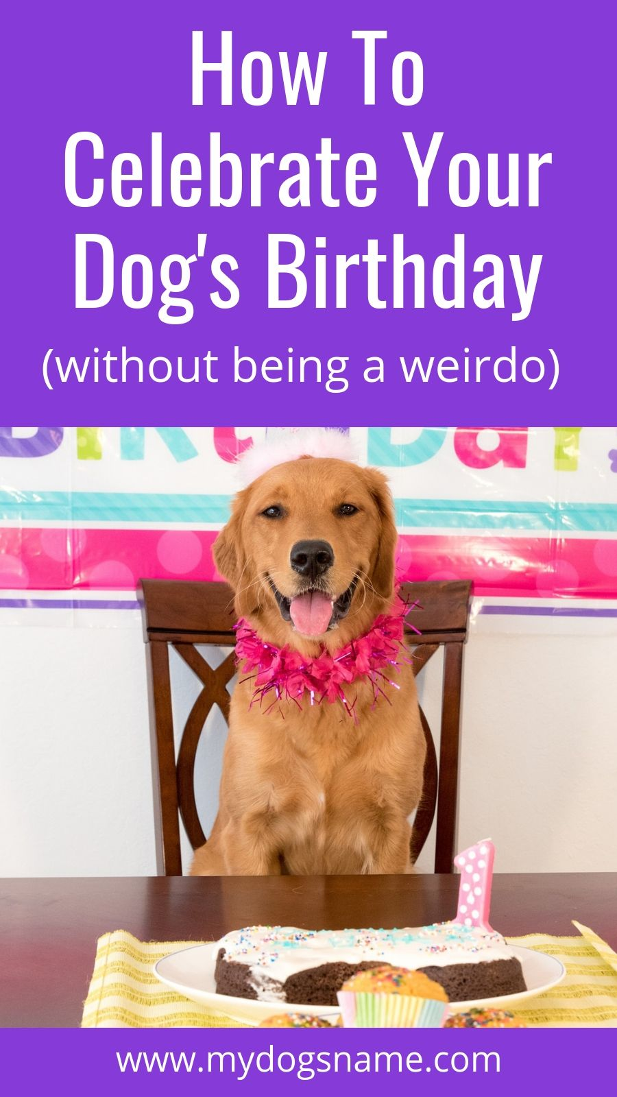 7 Fun Ways to Celebrate Your Dog's Birthday Dog birthday