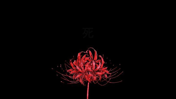 Red Spider Lilly