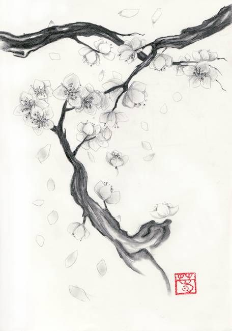 Cherry Blossoms By Elizabeth Morrissey Tree Drawings Pencil Cherry Blossom Art Cherry Blossom Drawing