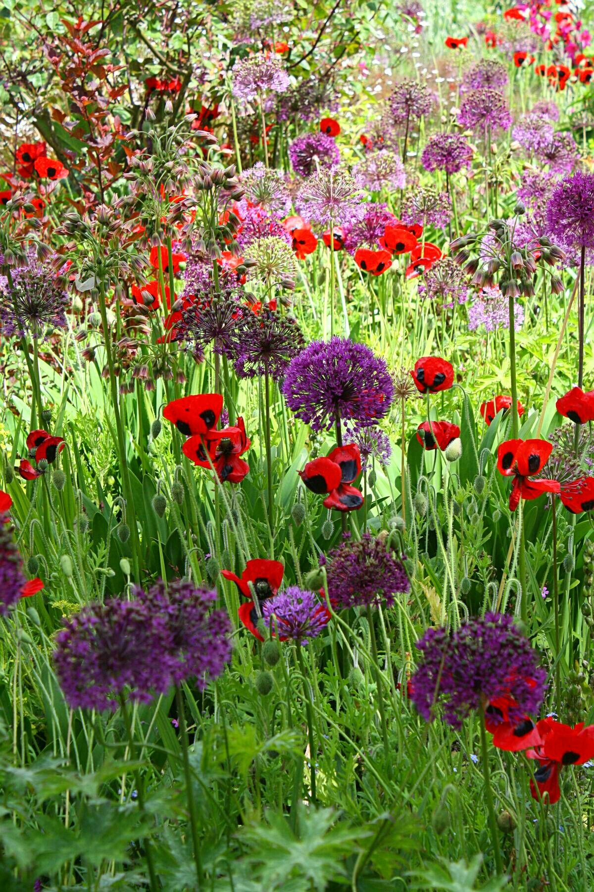 Alliums And Poppies Coltivare I Fiori Lettere Fatte Di Fiori