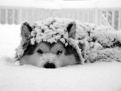21 Pics Of Puppies Playing In Snow So Cute They Ll Warm Your
