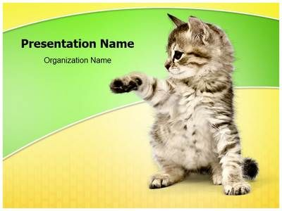 Kitten powerpoint template is one of the best powerpoint templates kitten powerpoint template is one of the best powerpoint templates by editabletemplates toneelgroepblik Gallery
