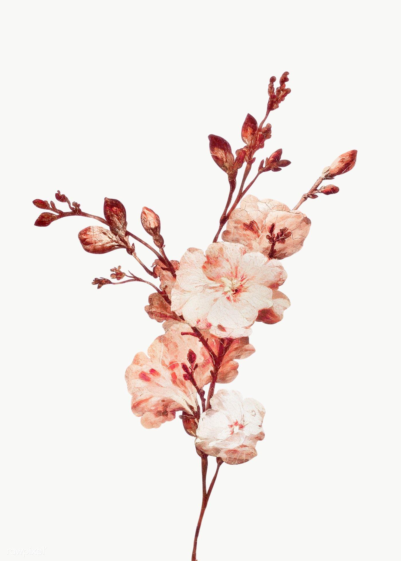Download Premium Png Of Vintage Bloom Flower Illustration Transparent Png In 2020 Flower Illustration Vintage Floral Backgrounds Flower Aesthetic