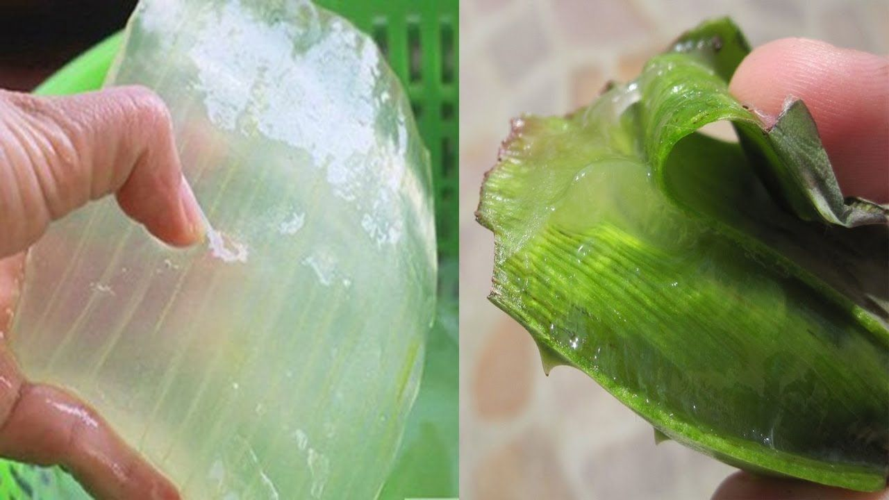 Discussion on this topic: 7 Reasons Why You Need Aloe Vera , 7-reasons-why-you-need-aloe-vera/