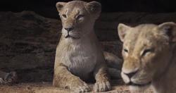Sarabi 2019 Film The Lion King Wiki Fandom Powered By Wikia Lion King Movie The Lion Sleeps Tonight Lion King 4