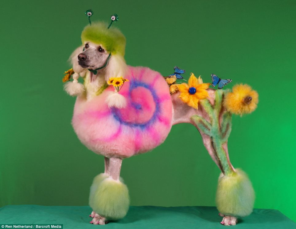 Poodle doodles dogs are transformed into pandas horses and even sorry could never do this to a dog i really dont like the idea of dying their hair and making them look like this posted as flower girlwow solutioingenieria Image collections