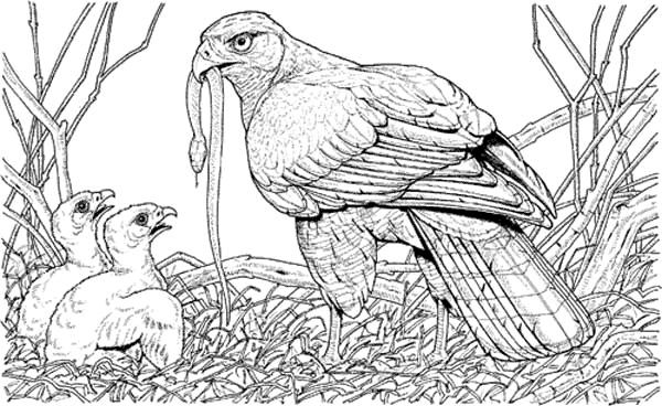 Fresh Eagle Coloring Pages On Pinterest Eagles Coloring Pages And