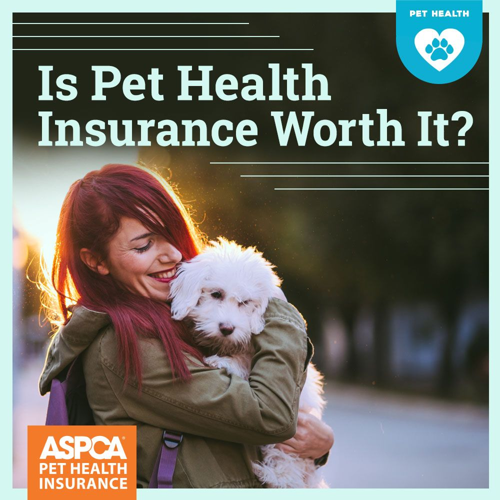 Is Pet Health Insurance Worth It Pet Health Insurance Pet Health Pet Insurance Cost