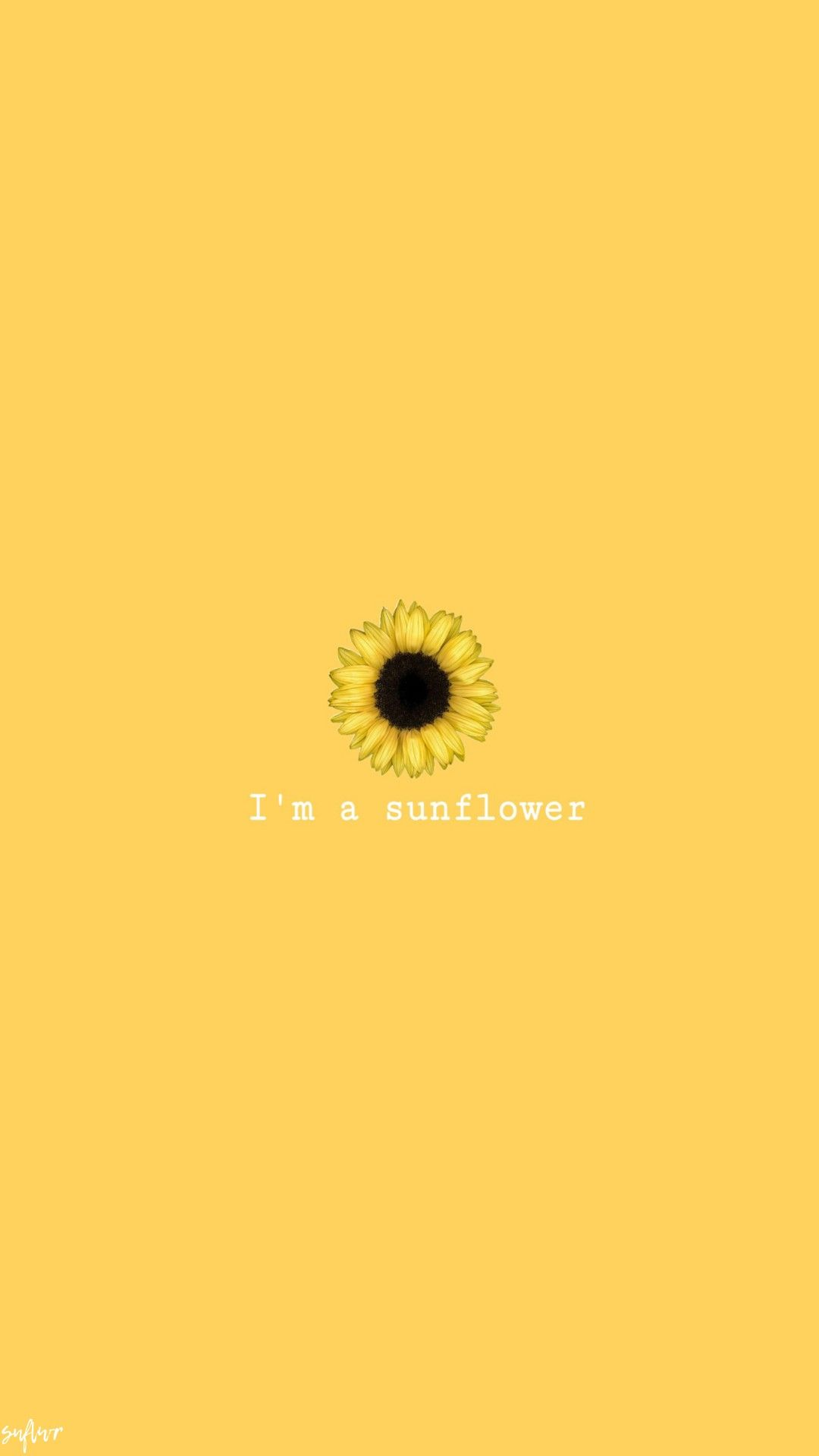 Sunflower Yellow Wallpaper Sunflower Wallpaper Cute Wallpapers
