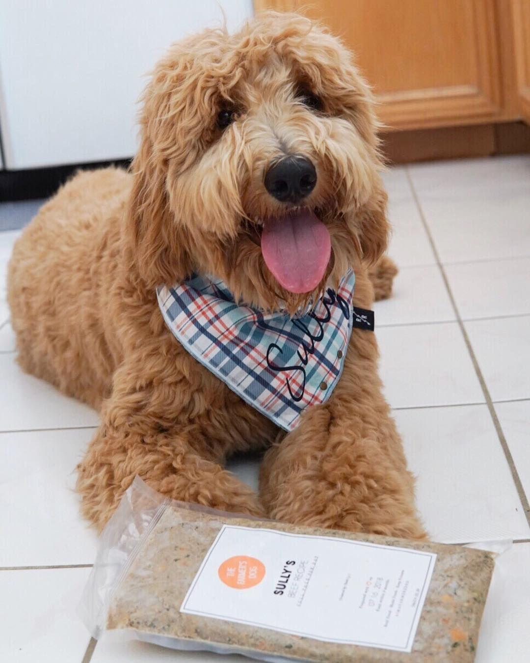 Dog food for doodles dog food recipes