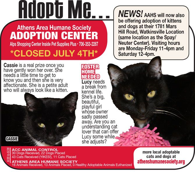 Adopt Me AAHS now offers adoption of kittens and dogs at