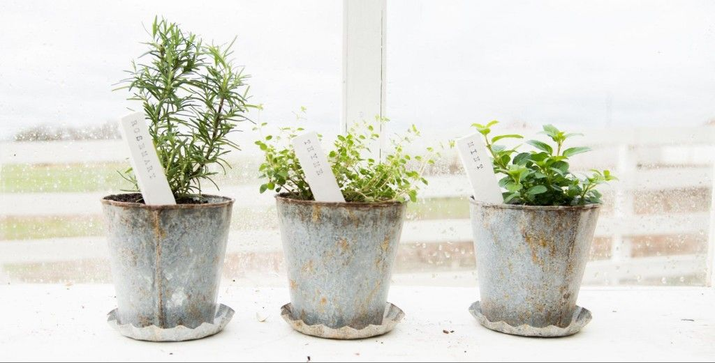 Diy plant stakes do it yourself spring project herbs garden diy plant stakes do it yourself spring project herbs garden solutioingenieria Images