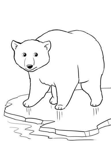 free polar bear worksheet for a winter theme unit worksheets coloring pages coloring pages - Baby Arctic Animals Coloring Pages