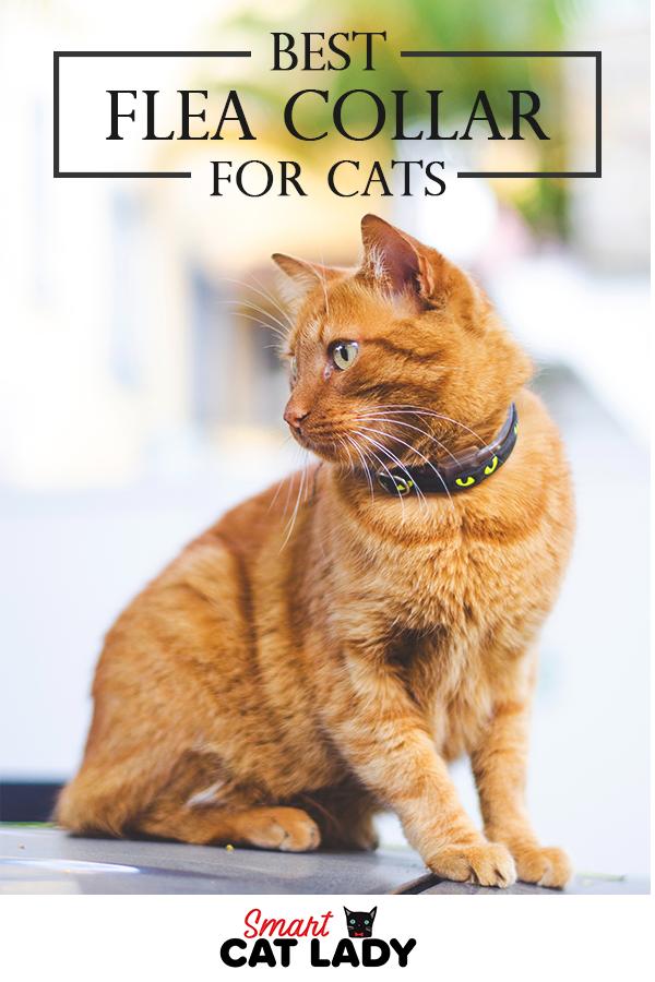 Best Flea Collar For Cats To Keep The Pests Away Cat Care Cat Has Fleas Cat Behavior