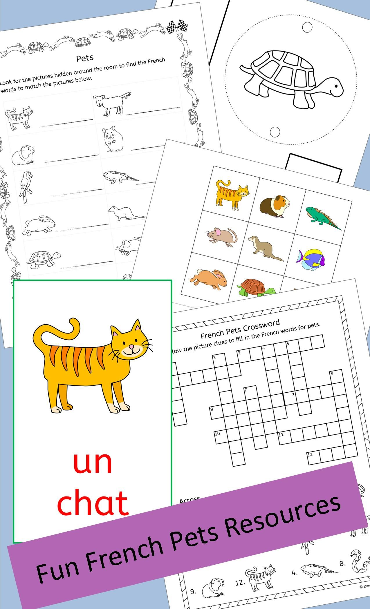 French Pets Fun Activities Puzzles And Bingo