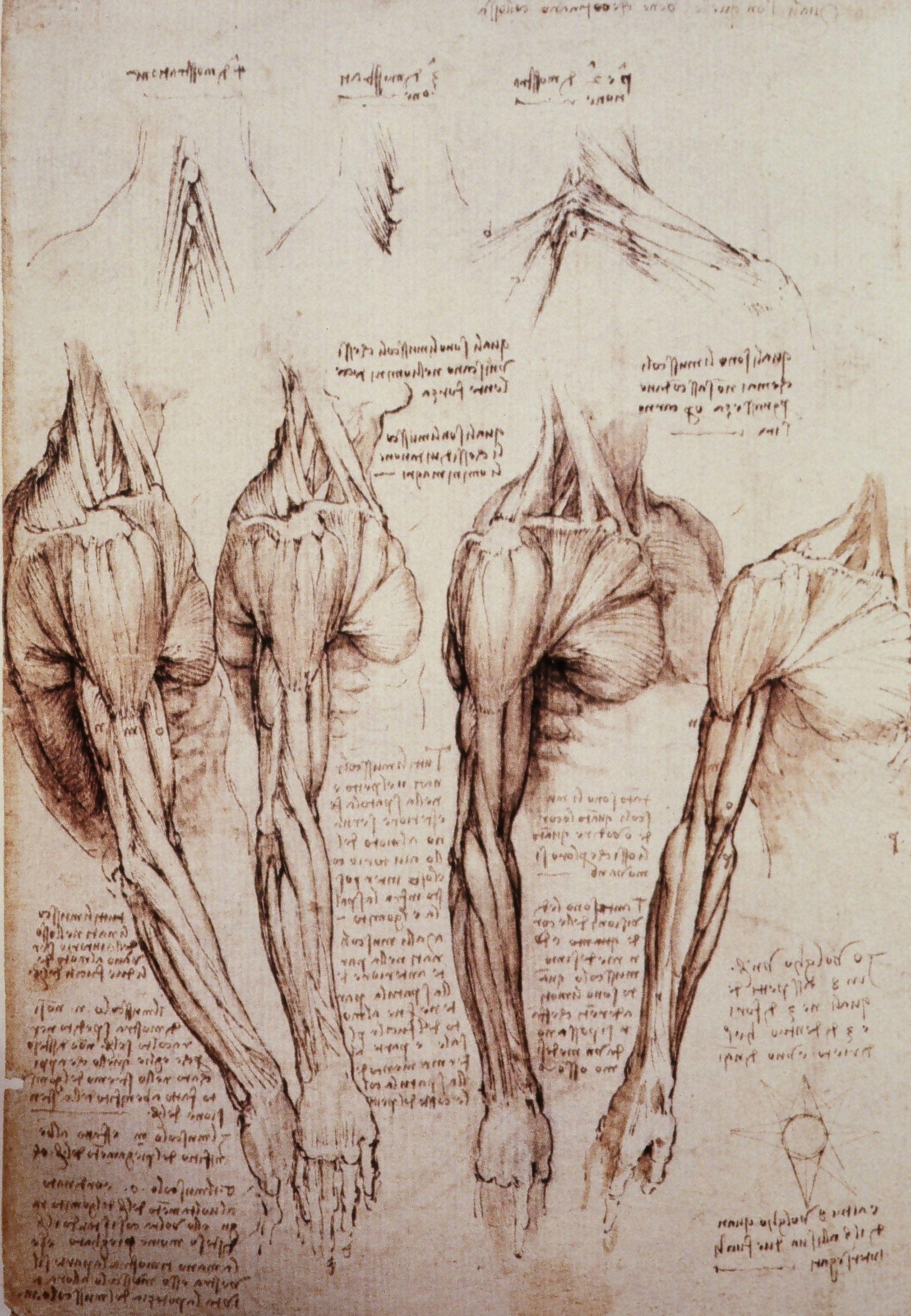 Leonard Da Vinci | Surface anatomy | Pinterest