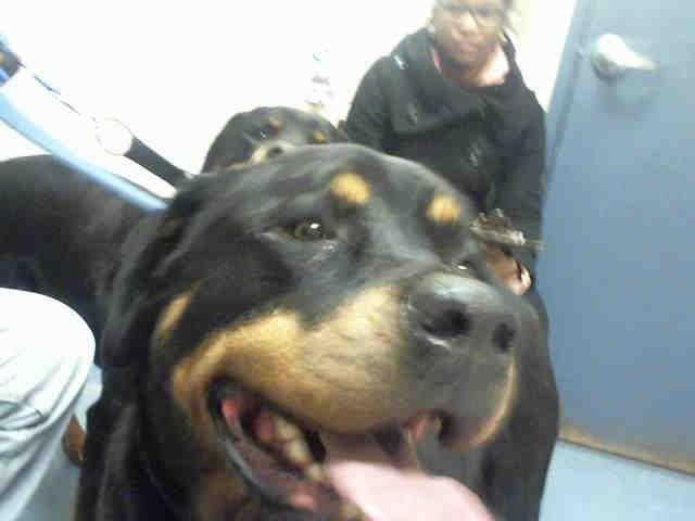 Meet Gorgeous Girl Asia Pittsburgh Pa Petharbor Com Animal