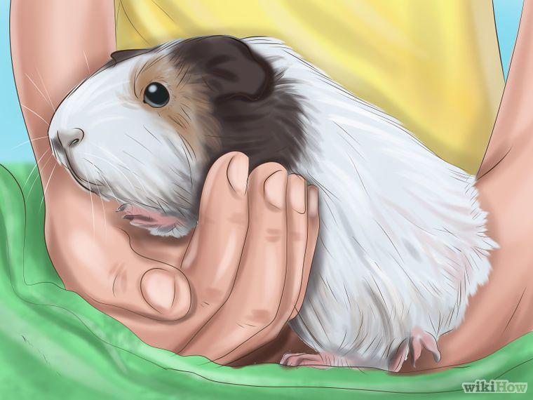 поздравление днем йога морских свинок картинки съезд