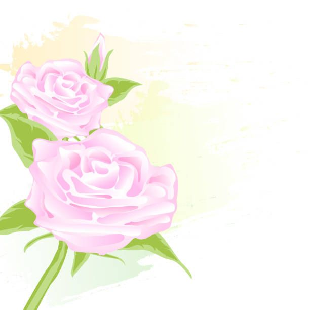 pink rose floral abstract watercolor style for background