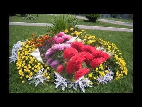 Лобелия ампельная фото цветы
