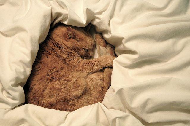 Kitty Dreams Cats Kittens Cat Sleeping