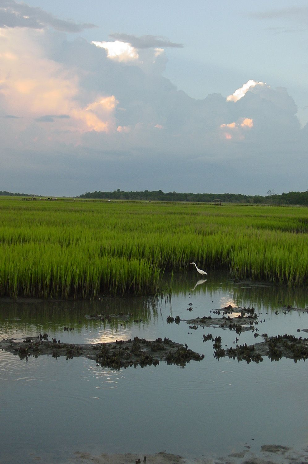 Quot Low Country Marsh Scene Quot Was Taken In A Favorite Place To