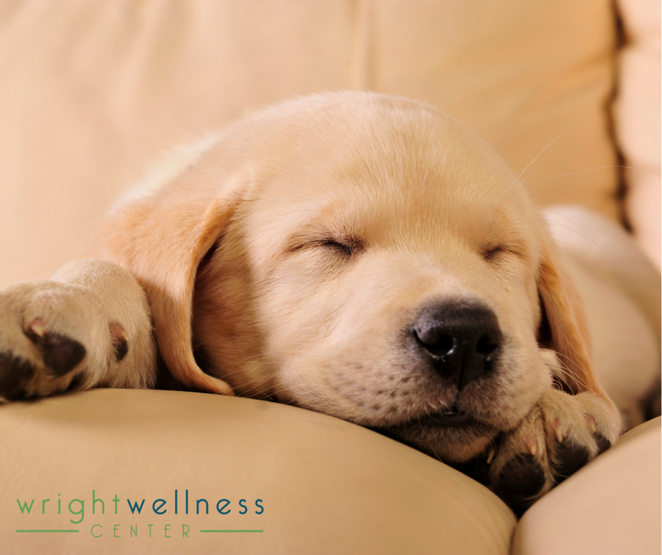 How to Put Your Busy Mind to Sleep Sleeping dogs, Lazy
