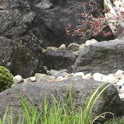 U邸 / U's residence | 施工事例 / Works | つちや造園/Tsuchiya Gardening Company Inc.-日本庭園,造園会社,a Japanese‐style garden