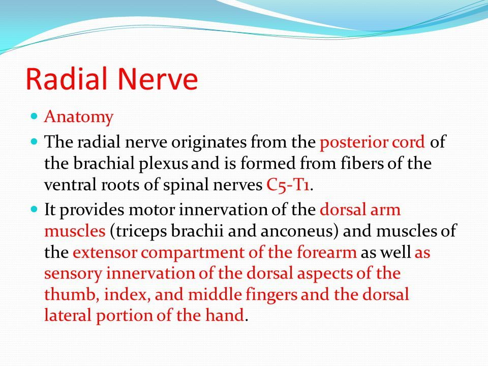 Image result for radial nerve innervation | Anatomy | Pinterest ...