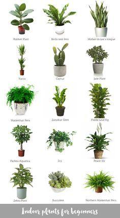 Beautiful Collage Of Awesome Indoor Plants #bomboracustomfurniture #blogsilove |  Plants | Pinterest | Plants, Indoor House Plants And Gardens