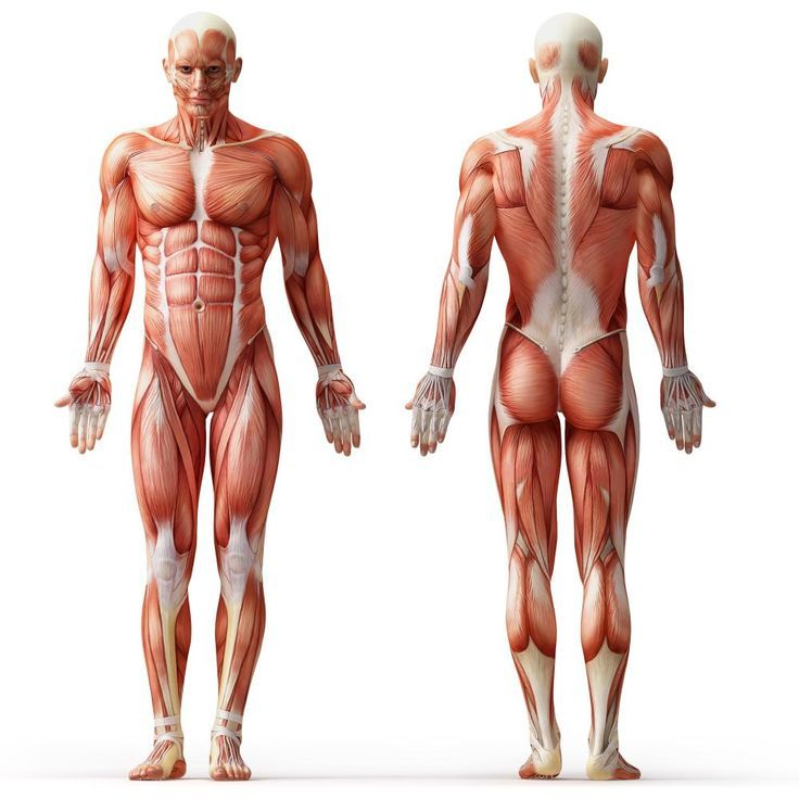 Complete Workout With Only Your Bodyweight Human Body Anatomy