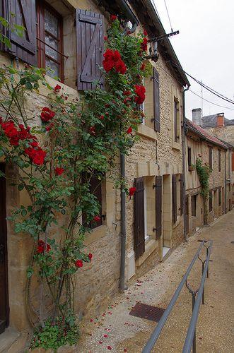 Spring Roses in Sarlat-la-Caneda, Aquitaine, France