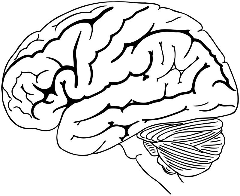 Brain Coloring And Drawing Page For Kids Human Brain Brain Drawing Coloring Pages