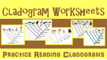 Cladogram Practice Worksheet