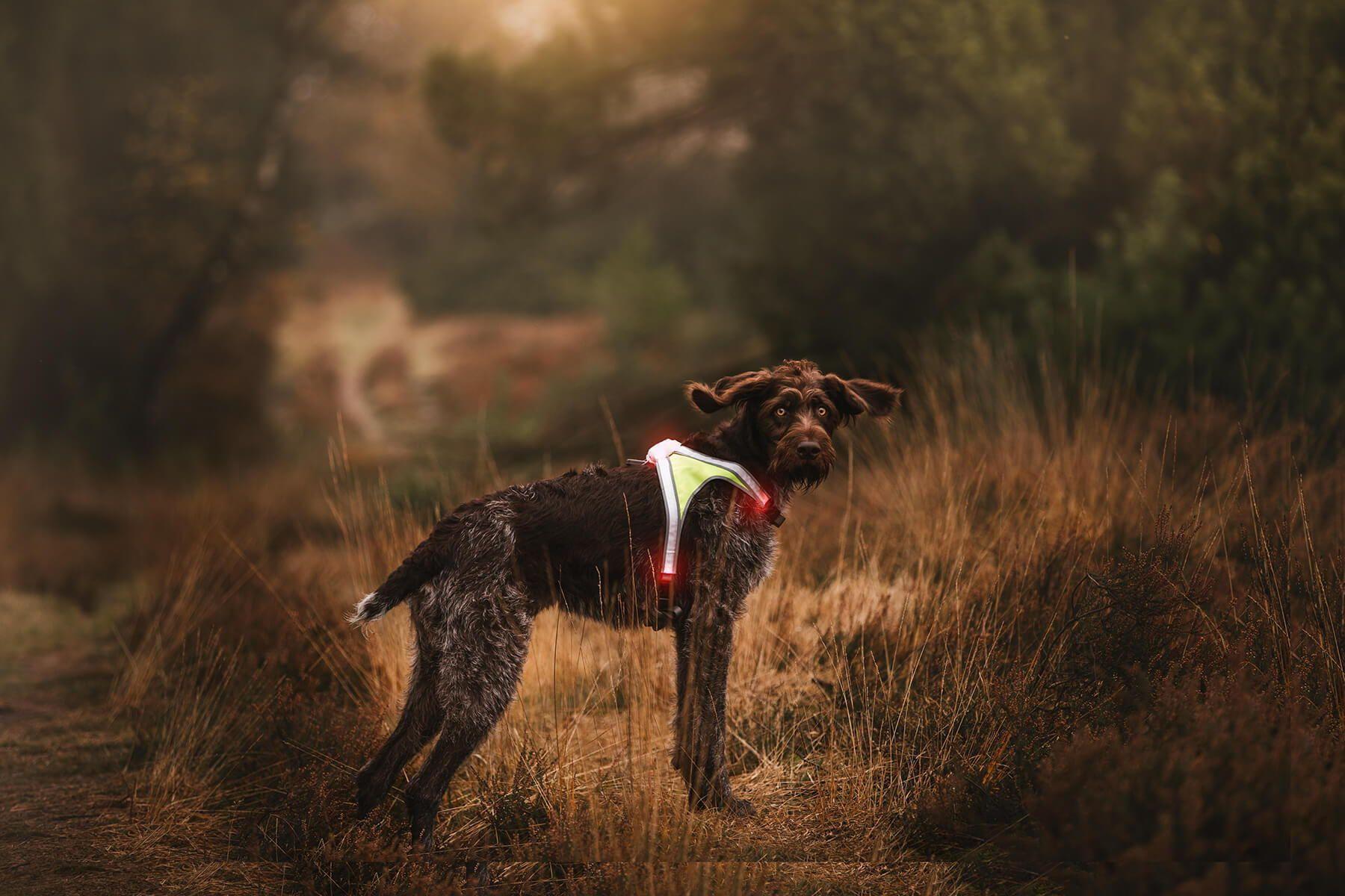 Lighthound Leuchtgeschirr