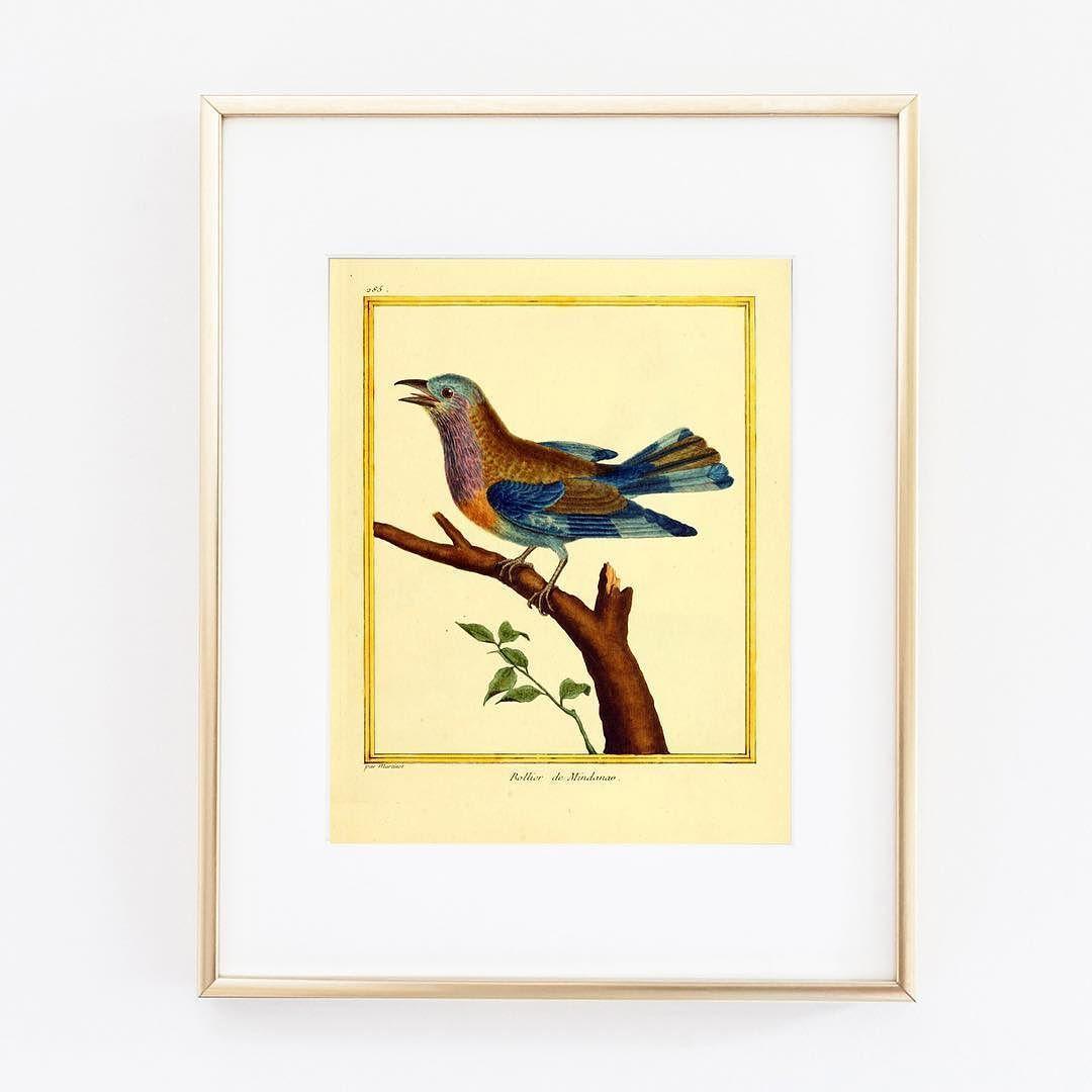 design #illustration #bird #vintage #art #etsy #artwork #antique ...