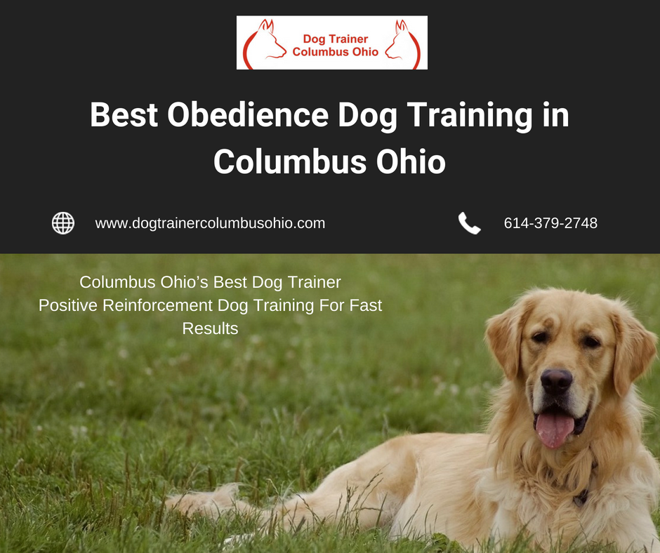 If You Are Looking For Trainer For Puppy Or An Elder Dog Don T Look Any Further Board With Terry Cook T Dog Trainer Dog Training Obedience Best Dog Training