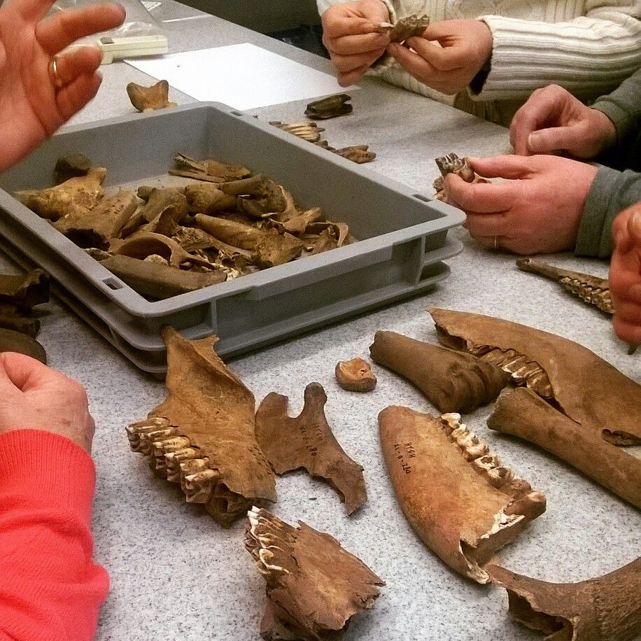 Archeo zoölogische workshop #archeohotspots #archeocommunity #groottuighuis #'s-Hertogenbosch