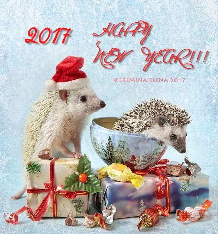 Happy New Year By Elena2012 Christmas Animals Pet Holiday Hedgehog Christmas