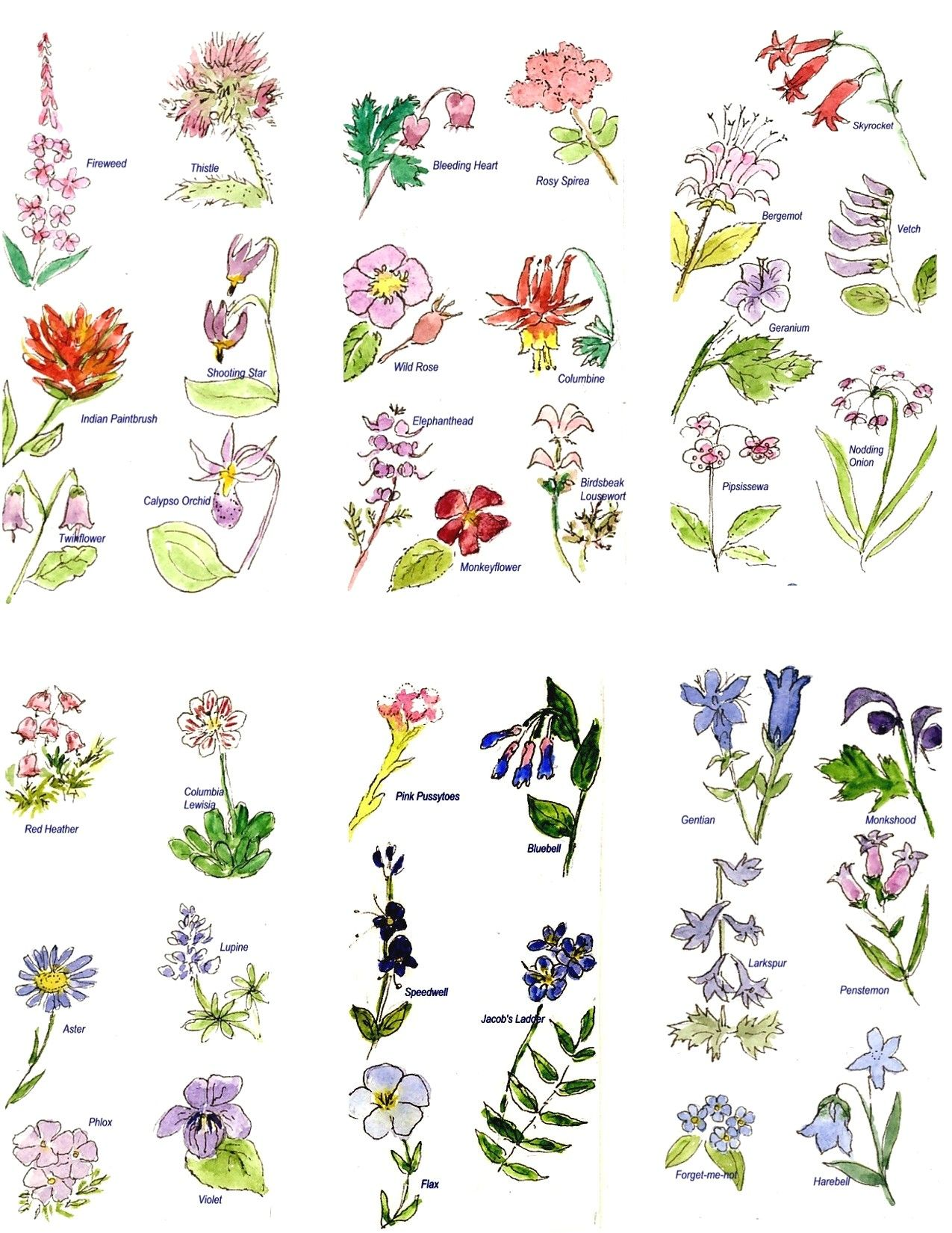 pictures of flower names Google Search Flowers names
