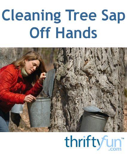 Cleaning Tree Sap Off Hands Tree Sap Remove Tree Sap Sap