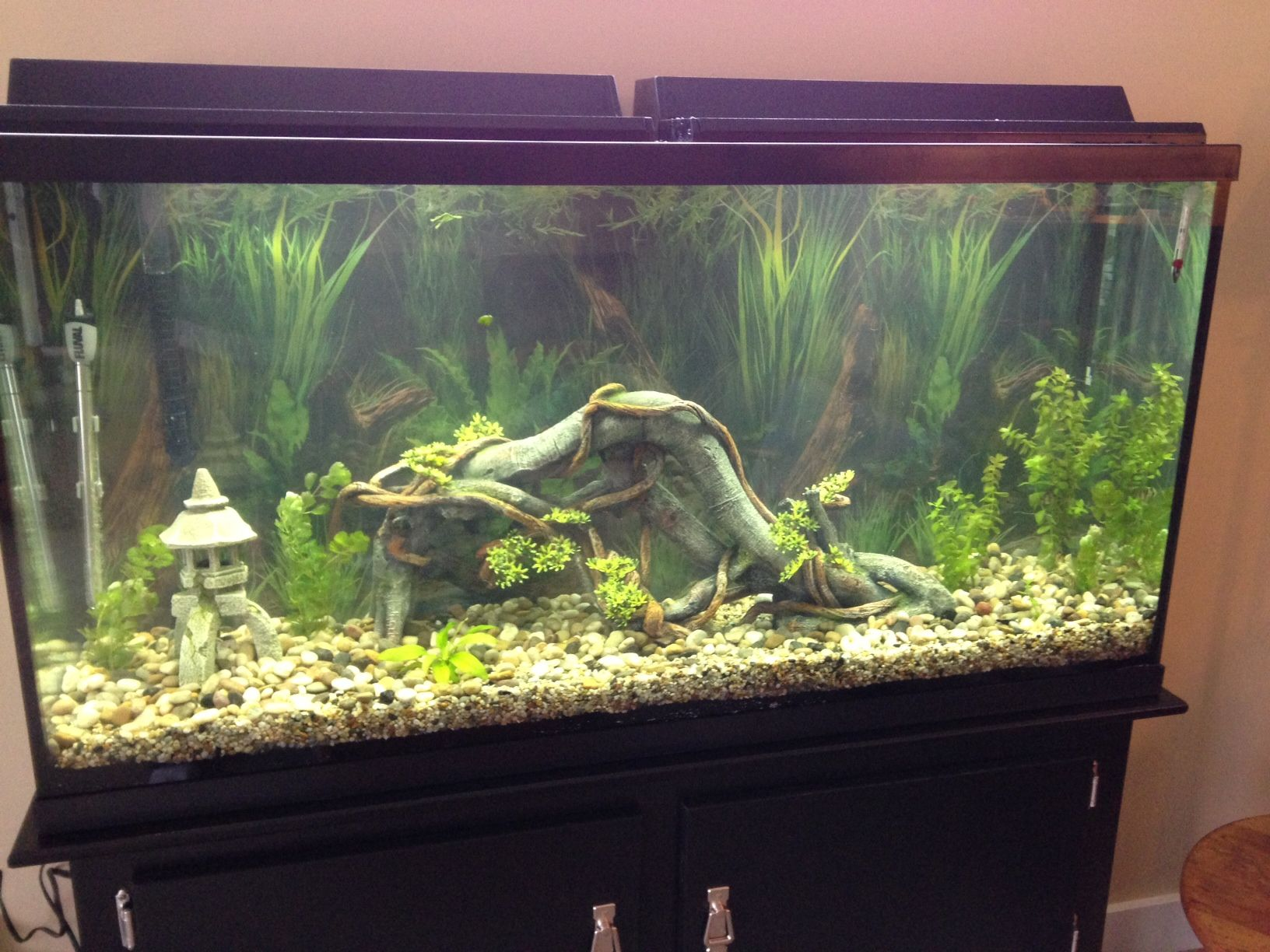 Recently Setup 60 Gallon Aquarium Fish Tank Tropical Fish Aquarium
