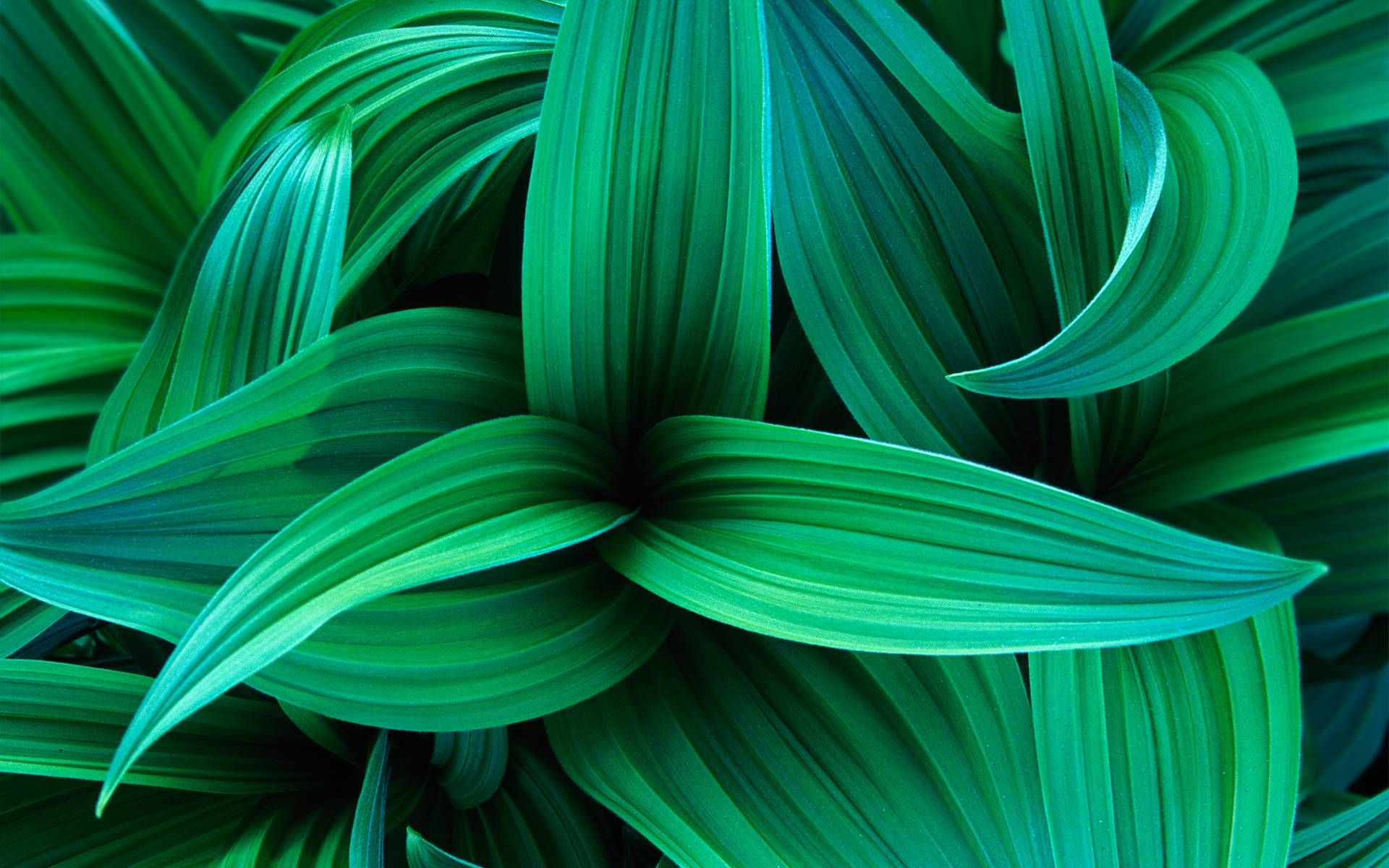 Turquoise Leafs Green Leaf Wallpaper Green Nature Nature Wallpaper