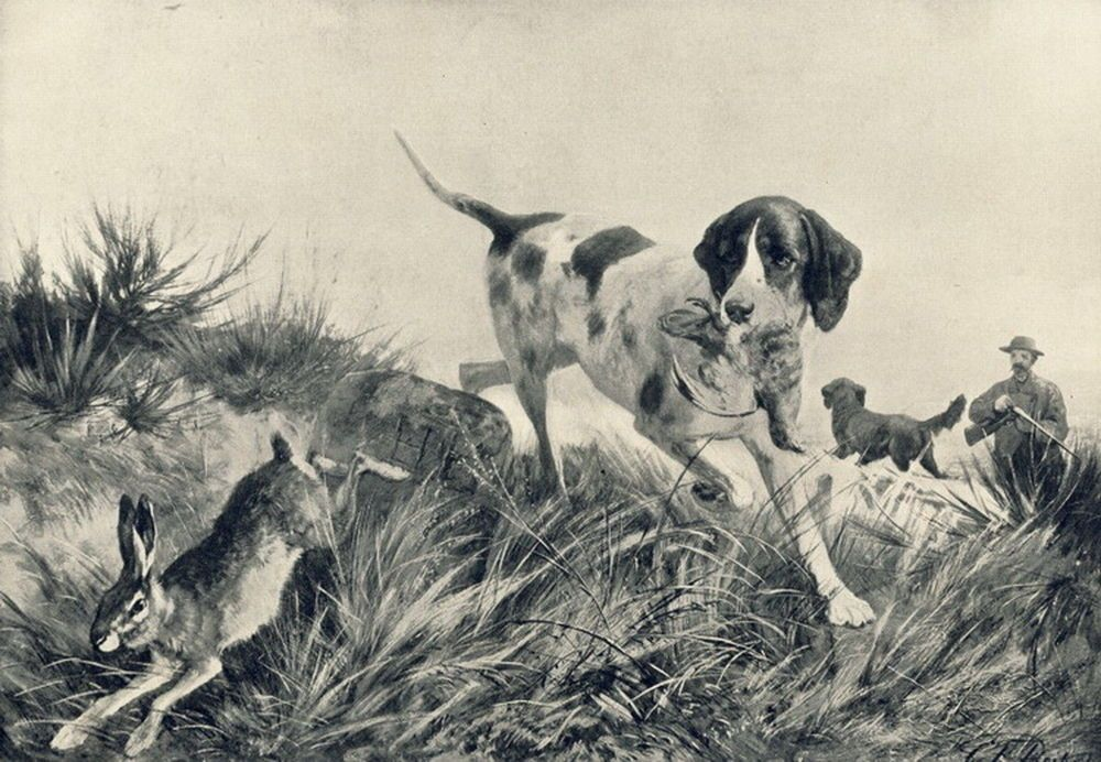 Rare C1894 Print C19th Victorian Hunter Pointer Bird Dog Chasing