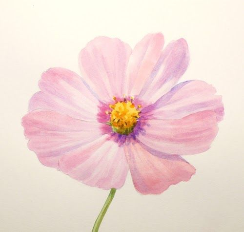 Watercolor Demo: wet in wet, wet on Dry: Cosmos Flower by