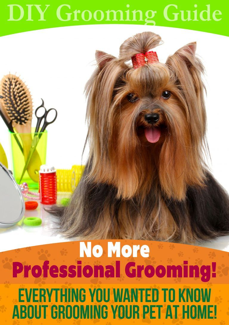 Everything You Wanted To Know About Pet Grooming Dog Grooming