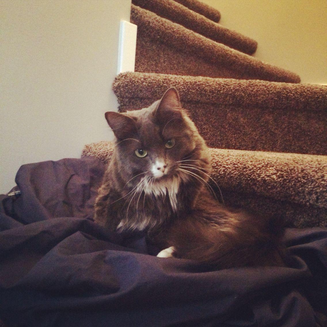 Misty_fluffybum Instagram rising star 😉 Animals, Cute