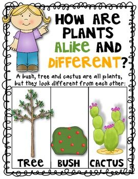 Science Plant Posters Set Of 4 Alike And Different Plant
