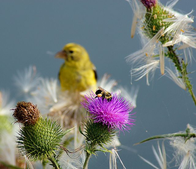 Watchful Eye - nature photo by Bill Pevlor of PopsDigital.com. #bee #bird #flower